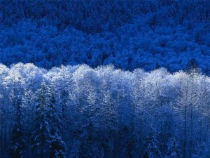 blue-winter-scene